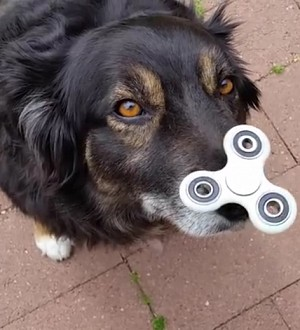 5 Times the Fidget Spinner Craze Went Too Far!