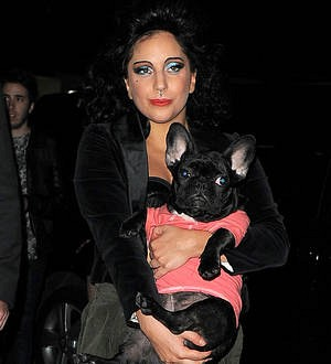 Lady Gaga launching dog product collection