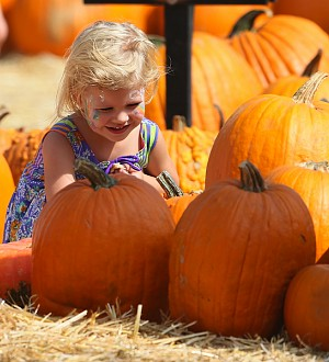 The 3 Best Pumpkin Patches In America!
