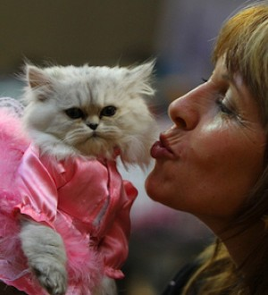 Save the Date: CatCon L.A. Celebrates All Things Feline This Summer!
